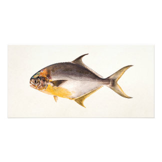 Vintage Pompano Fish- Game Fishes Template Blank Photo Card