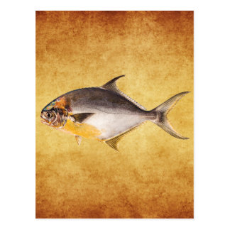 Vintage Pompano Fish - Game Fishes Template Blank Postcard
