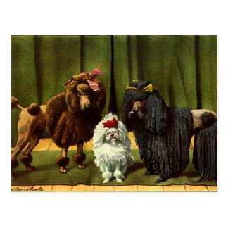 Vintage Poodle Dogs Postcard