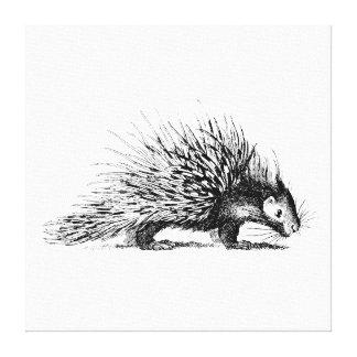 Vintage Porcupine Illustration - 1800's Porcupines Canvas Print