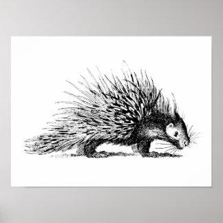 Vintage Porcupine Illustration - 1800's Porcupines Poster