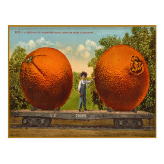 Vintage Postcard With Californian Mammoth Oranges