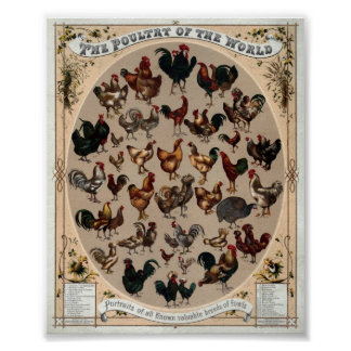 Vintage Poultry Of The World Print