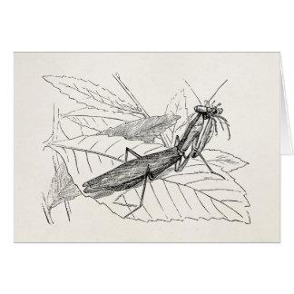 Vintage Praying Mantis Insect Template