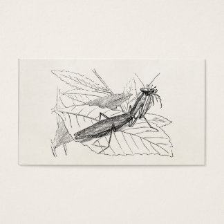 Vintage Praying Mantis Insect Template Business Card