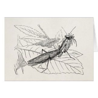 Vintage Praying Mantis Insect Template Card