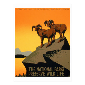 VIntage Preserve Wildlife Poster Postcard