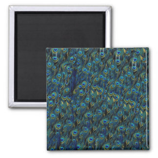 Vintage Pretty Peacock Bird Feathers Wallpaper 2 Inch Square Magnet