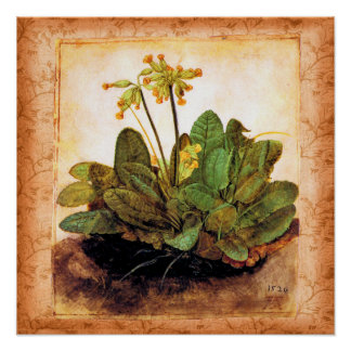 Vintage Primrose Primula Flower Print