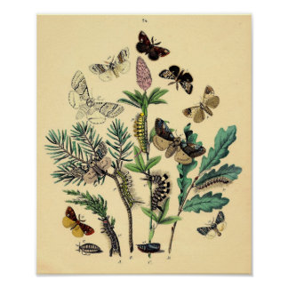 Vintage Print - Bohemian Moths & Butterflies