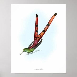 Vintage print,colorful poster of Hummingbird