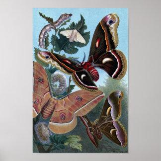 Vintage Print - Moths & Butterflies