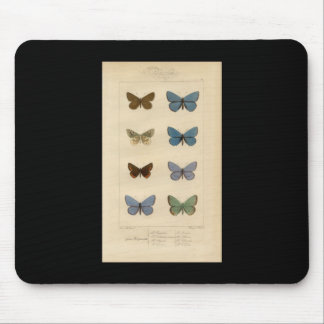 Vintage Print - Polyommatus - Moths & Butterflies Mouse Pad