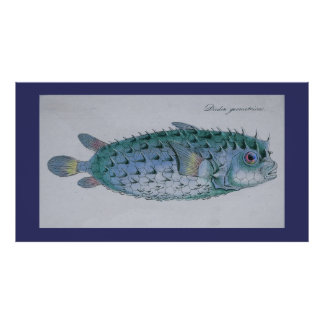 vintage puffer fish poster