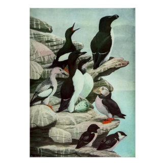 Vintage Puffins, Aquatic Bird, Marine Life Animals Poster
