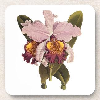 Vintage Purple Cattleya Orchid, Tropical Flowers Drink Coaster