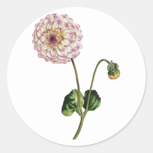 Vintage Purple Flower Ilustration Classic Round Sticker