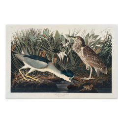 Matte Poster with Audubon's Night Heron design
