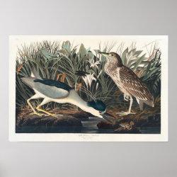 Matte Poster with Audubon's Night Heron design