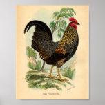 Vintage que cultiva el gallo de la impresión del V Impresiones