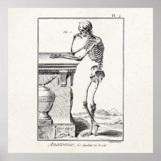 Vintage que piensa la anatomía médica esquelética  póster