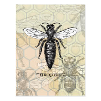 Vintage Queen Bee Illustration Postcard