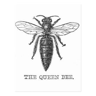 Vintage Queen Bee Illustration Postcard