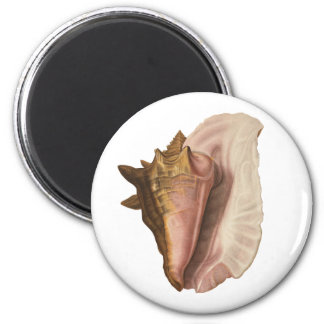 Vintage Queen Conch Seashell Shell, Marine Animal Magnet