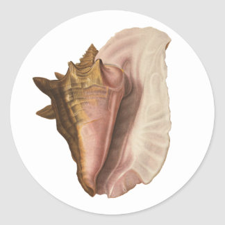 Vintage Queen Conch Shell Seashell, Marine Animal Classic Round Sticker