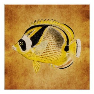 Vintage Raccoon Butterfly Fish - Antique Hawaiian Poster