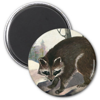 Vintage Raccoon, Wild Animal Forest Creatures Magnet