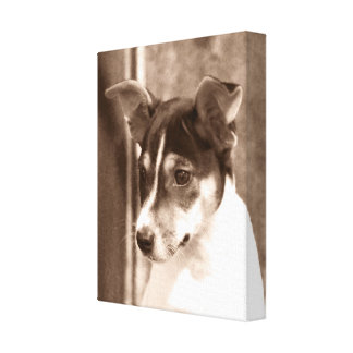 Vintage Rat Terrier Canvas Wrap Gallery Wrapped Canvas