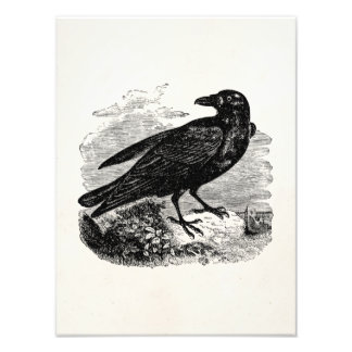 Vintage Raven Black Bird Crow Personalized Birds Art Photo