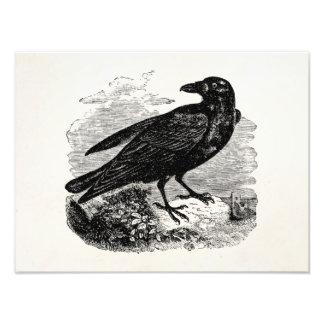 Vintage Raven Black Bird Crow Personalized Birds Photo Art