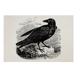 Vintage Raven Black Bird Crow Personalized Birds Poster
