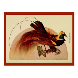 Vintage red bird of paradise color litho photo postcard