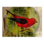 Vintage Red Bird Post Cards