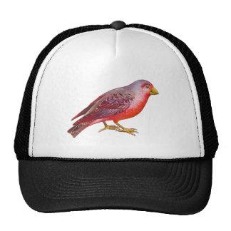 Vintage Red Bird Trucker Hat