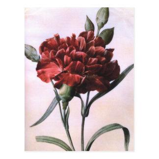 Vintage Red Carnation Postcards