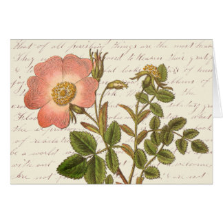 Vintage Red French Rose Thank You Notes Greeting Card