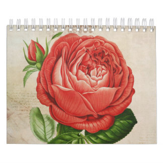 Vintage Red Hybrid Perpetual, Paul Neyron Rose Calendar