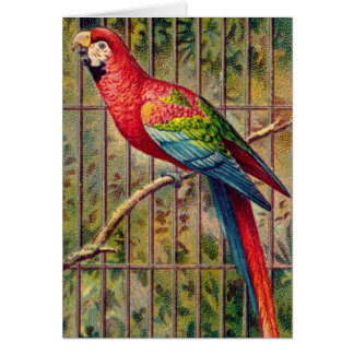 Vintage Red Macaw Parrot Print Card