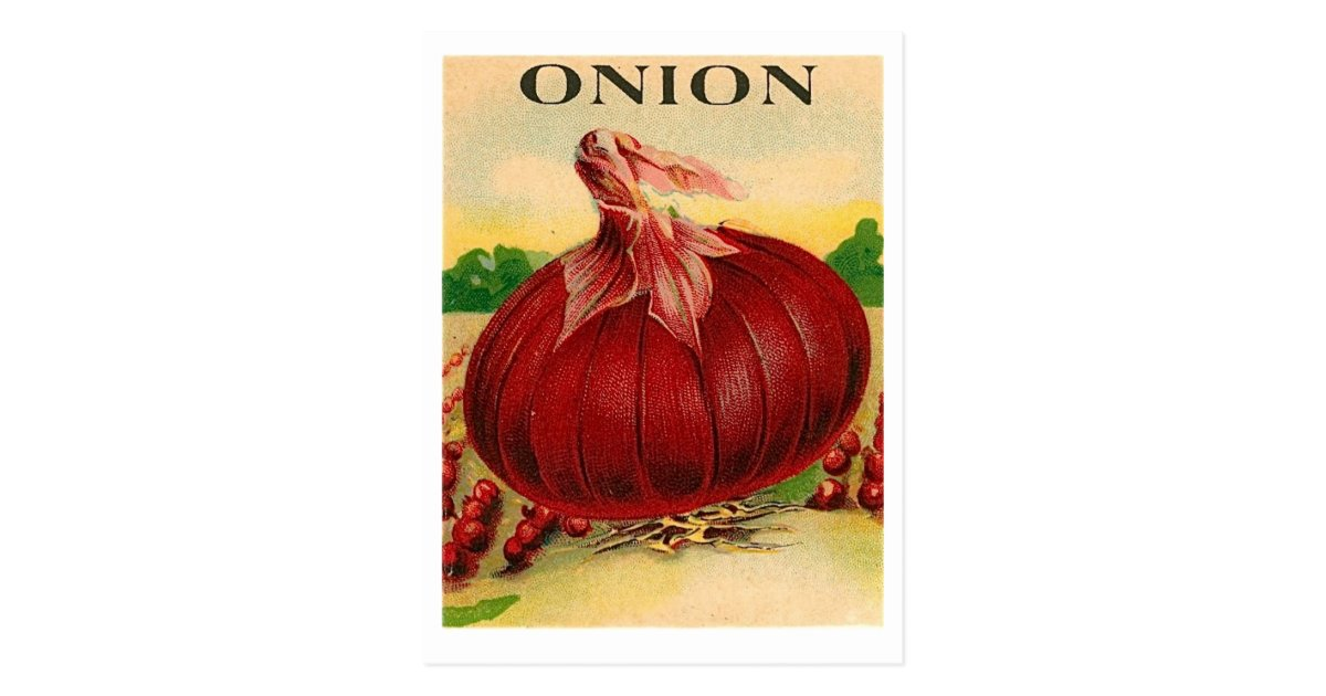 Vintage Red Onion Seed Packet Postcard Zazzle Com