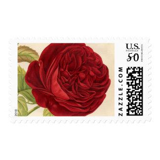 Vintage Red Peony Postage Stamp