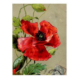 Vintage Red Poppy Postcard