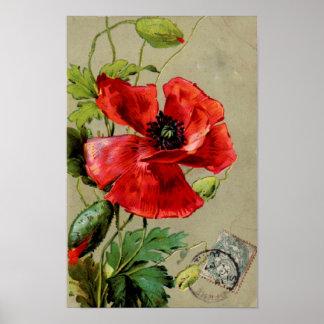 Vintage Red Poppy - Print