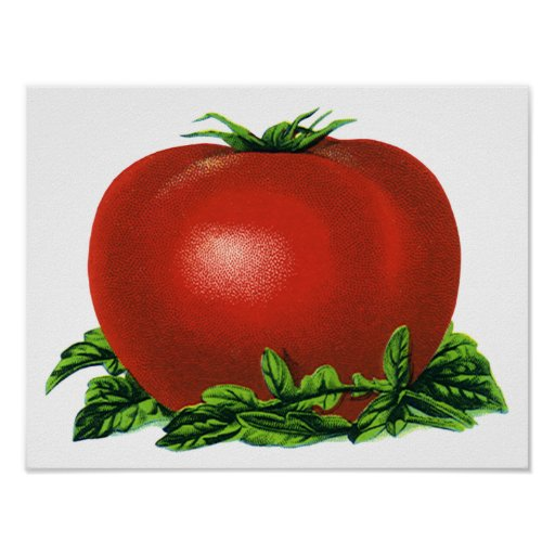 Vintage Red Ripe Tomato, Food Fruits Vegetables Poster