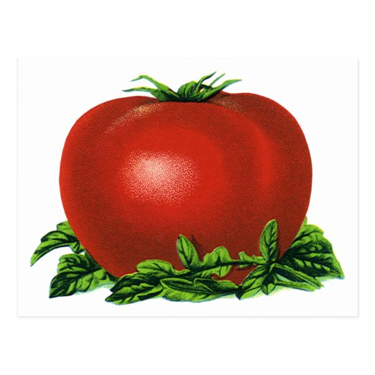 Vintage Red Ripe Tomato, Vegetables and Fruits Postcard