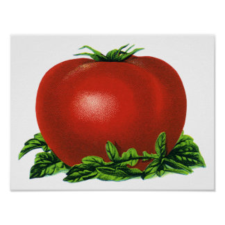 Vintage Red Ripe Tomato, Vegetables and Fruits Poster