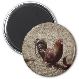Vintage red rooster fridge magnets